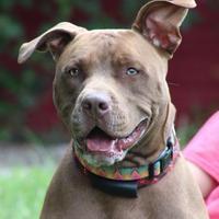 Adopt A Pet :: Axel *Graduate & Trainee* - Glen Allen, VA