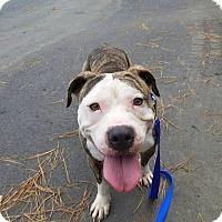 Adopt A Pet :: Juan Pablo - Greensboro, NC