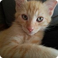 Adopt A Pet :: Cooper - Oakley, CA