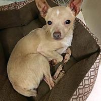 Adopt A Pet :: Romeo - Fort Wayne, IN