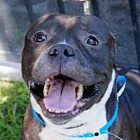 Adopt A Pet :: RAIDER - Long Beach, CA