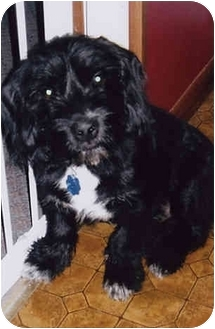 Dachshund Mix Puppy for adoption in Owatonna, Minnesota - Wayne