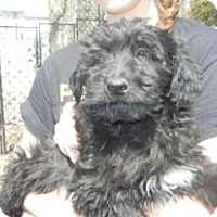 Adopt A Pet :: Mackay ADOPTED!! - Antioch, IL