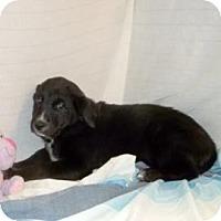 Adopt A Pet :: Nova - South Jersey, NJ