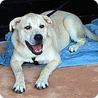 Adopt A Pet :: Toby - Minneola, FL