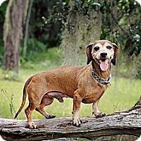 Adopt A Pet :: Peanut - Bartow, FL