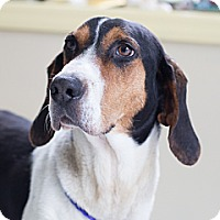 Adopt A Pet :: WALKER-URGENT - Providence, RI