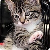 Adopt A Pet :: Roland - Clinton, LA
