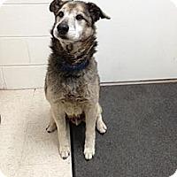 Adopt A Pet :: Riley - Lancaster, VA