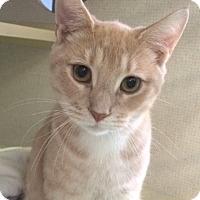 Adopt A Pet :: Franco - New York, NY