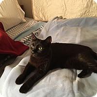 Adopt A Pet :: Luna - Fountain Hills, AZ