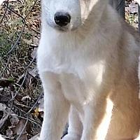 Adopt A Pet :: Hope - Normandy, TN