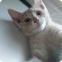 Adopt A Pet :: Comiskey - Columbus, OH
