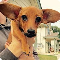 Adopt A Pet :: Sally - Wimberley, TX