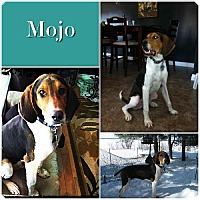 Adopt A Pet :: Mojo -ADOPTED - Ontario, ON