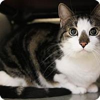 Adopt A Pet :: Ester - Boise, ID