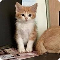 Adopt A Pet :: PAULETTE/PAULIE/PEETIE - Houston, TX