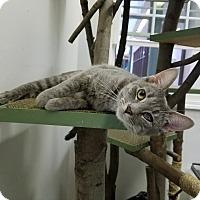 Adopt A Pet :: Nene - Elyria, OH