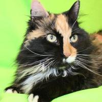 Adopt A Pet :: Camilia - Kalispell, MT