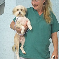 Adopt A Pet :: BLAKELEE - Williston Park, NY