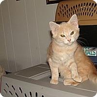 Adopt A Pet :: Jill - Spotsylvania, VA