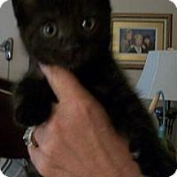 Adopt A Pet :: Cavier - Reston, VA