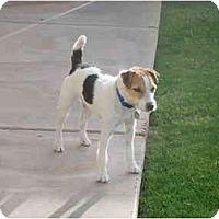 Adopt A Pet :: HARRY - Scottsdale, AZ