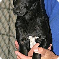 Adopt A Pet :: Daiquiri - Lufkin, TX