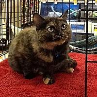 Adopt A Pet :: Kimber - Garner, NC