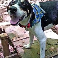 Adopt A Pet :: Baz - Richmond, VA
