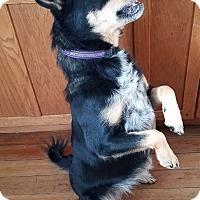 Shepherd (Unknown Type) Mix Dog for adoption in Minerva, Ohio - Molly