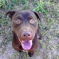Adopt A Pet :: Jesse - Smithfield, NC