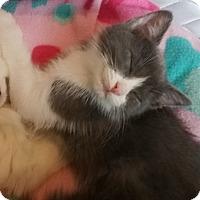 Adopt A Pet :: Pecan - North Highlands, CA