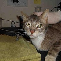 Adopt A Pet :: SMITTY - Long Beach, CA