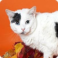 Adopt A Pet :: Yolandi - Brooklyn, NY