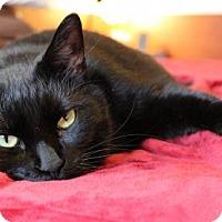 Adopt A Pet :: Chloe (LT) - Trenton, NJ