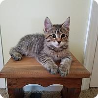 Adopt A Pet :: Indy - Turnersville, NJ