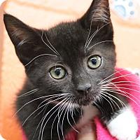 Adopt A Pet :: Dawn - Sarasota, FL