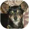 Chihuahua Dog for adoption in Aloha, Oregon - Sam