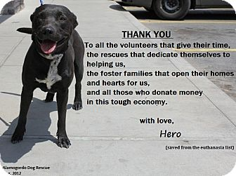 Pit Bull Terrier Mix Dog for adoption in Alamogordo, New Mexico - Hero