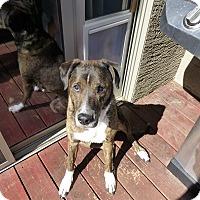 Adopt A Pet :: Zoe - Gilbert, AZ