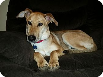 Shepherd (Unknown Type) Mix Dog for adoption in Grand Rapids, Michigan - Duncan