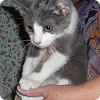 Adopt A Pet :: Levi - Dallas, TX