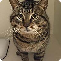 Adopt A Pet :: Kiernan - Merrifield, VA