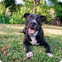 Adopt A Pet :: Max - La Habra, CA
