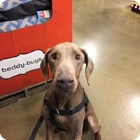 Adopt A Pet :: Obi - Omaha, NE