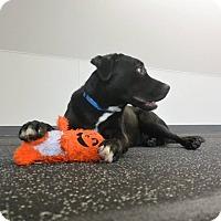 Adopt A Pet :: Dash - Meridian, ID