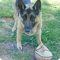 Adopt A Pet :: Major - Nashua, NH