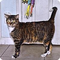 Adopt A Pet :: Minuet - West Palm Beach, FL