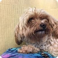 Adopt A Pet :: KIBBLES - Elk Grove, CA